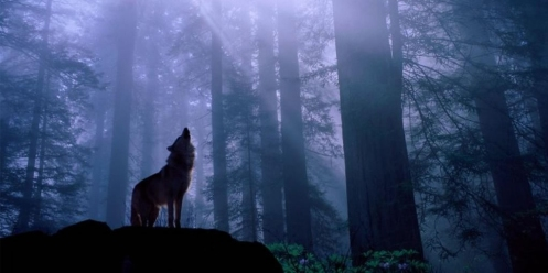 wallwolf011